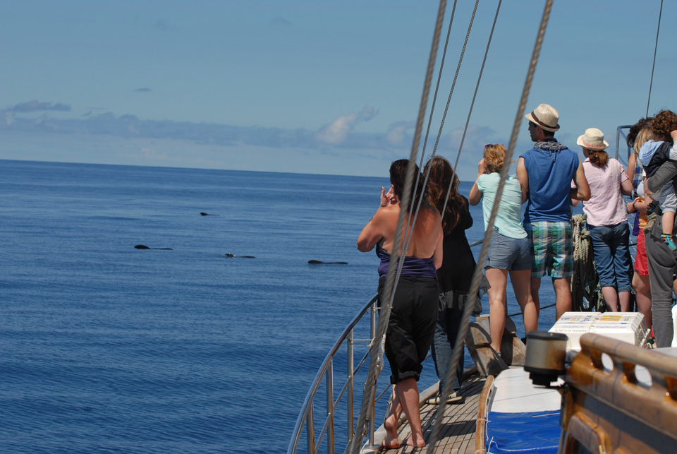 whale dolphin boat tour